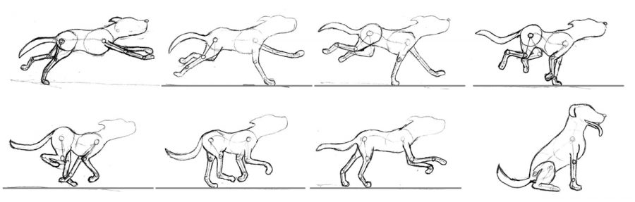 Run cycle of dog used in Elders Pest Control animation